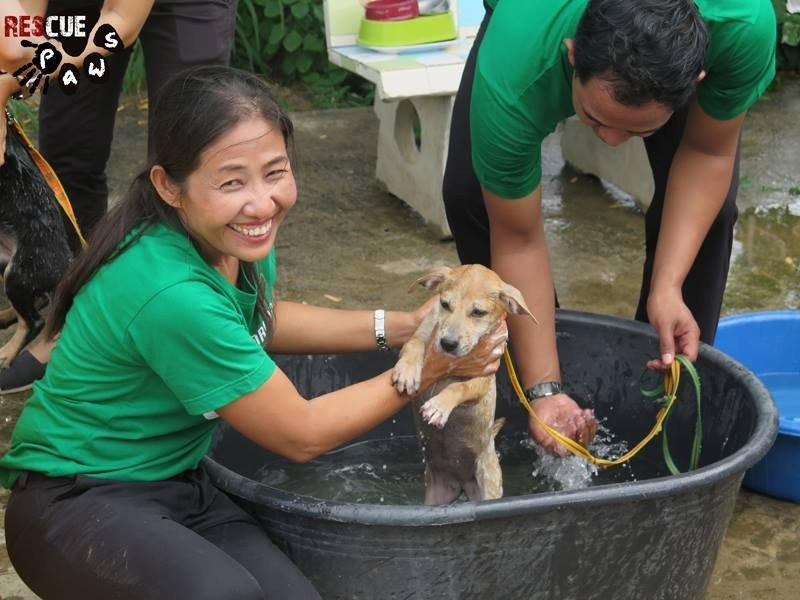 Rescue Paws Benefactor of Banyan's Generosity ⋆ Hot Magazine