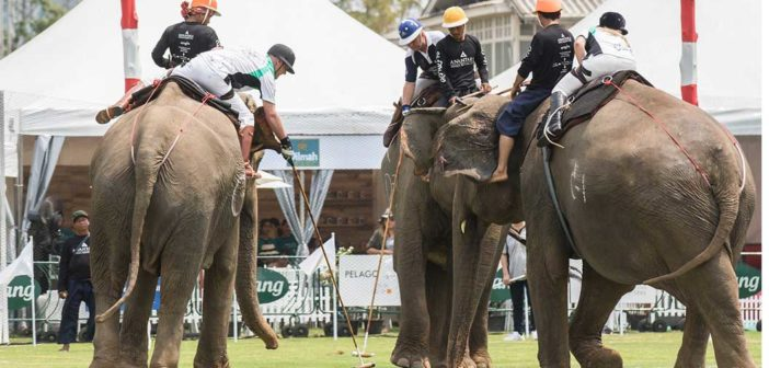 2018 King's Cup Elephant Polo Raises a Trunkload of Cash for Elephant Charities