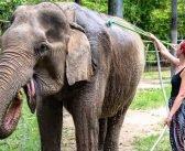 A Day Amongst Elephants