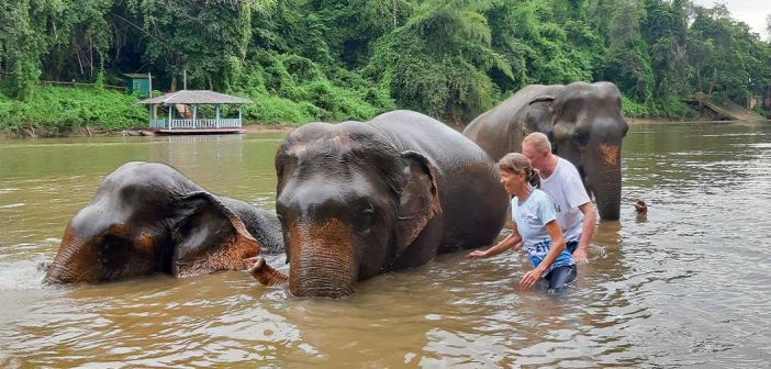 Up Close and Personal,  Elephant Haven, Kanchanaburi