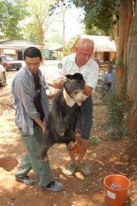 Bear rescue 1089