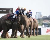 The 14th Annual King's Cup Elephant Polo Tournament