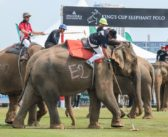 Thailand's Pachyderms Are The Beneficiaries To Millions Thanks The The Anantara